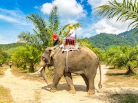 Holiday in Elephant Jungle Sanctuary in Phuket poi in Thailand