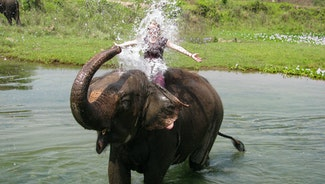 Holiday in Bathing with elephants in sea excursion in Thailand