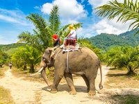 Holiday in Elephant Trekking Tour excursion in Thailand