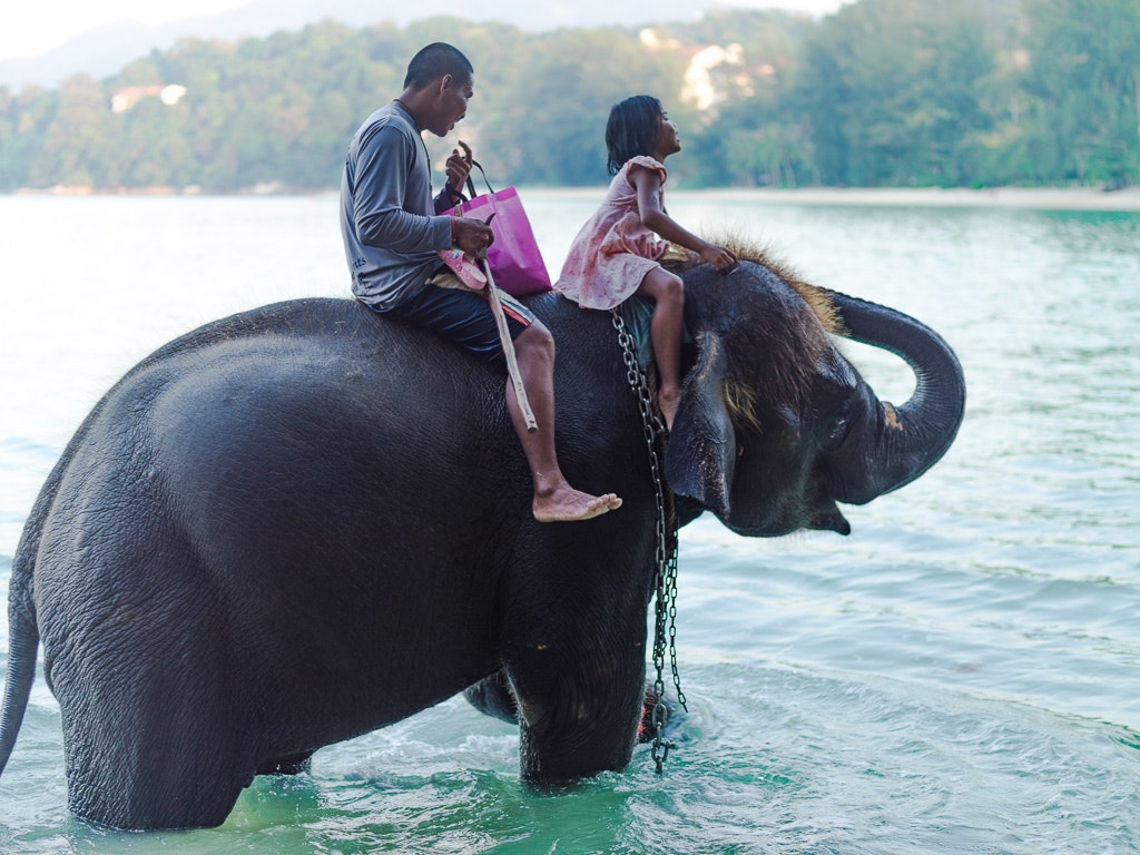 Bathing with elephants in sea excursion Thailand Holiday