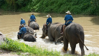 Holiday in Bareback Elephant Riding excursion in Thailand